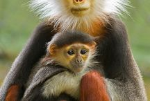I love monkeys (๑-﹏-๑)