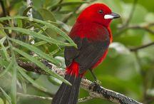 Birds / Beautiful Birds, Birds
