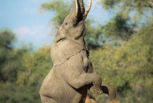 Lowis & Leakey | Zimbabwe