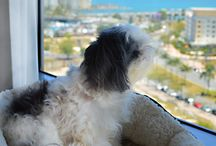 #luxpet / It's a dog's life here in the Luxperience office. Our canine correspondents are working their paws to the bone sniffing out the most #soluxperience pet friendly experiences in Australia and around the world  We want you to share your #luxpet pictures and stories of your jet set pets. Make sure you use the #luxpet and #soluxperience.