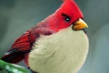 BIRDS / by Julieann Clevenger