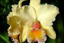 Orchids, my favorite