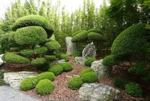 Titivating Topiary