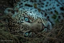 Africa Travel and Photography / African Travel Inspiration  / by OurOyster Travel
