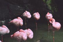 pink as floyd