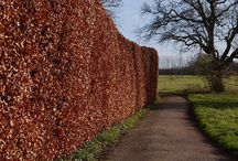 Driveway hedge / by Mandy Mount
