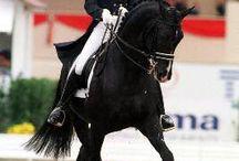 Horses-Dressage