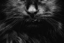 Cats / Black & white cats