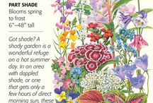 Botanical Interests - Shade Flowers