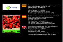 Pla d'Escarp SAT 1235 / Cooperativa de Fruita d'Alcarràs