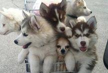 Süße flauschige Tiere / Soooooo süß!!!