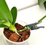 Növények így-úgy
