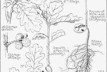 Atlasy herbáře