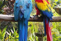 Parrots ❤️