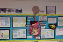 Digestive System Displays