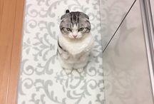 Cat (ФωФ) ねこ