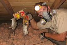 Attic Cleanup Insulation Removal Playa Del Rey CA / We provide attic cleanup, insulation removal or replacement in Playa Del Rey CA. Animal dropping decontamination