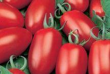 Gemüsegarten/Pflanzen/Garten