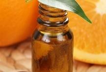 Orange douce / Le bigaradier est un petit arbre au feuillage toujours vert. Le fruit est une baie plus particulièrement un agrume amer et acide. (M.Faucon)