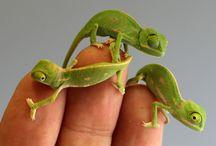Reptile ❤️