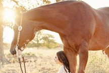 lovas hátterek