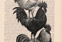 Graphics: birds and animals