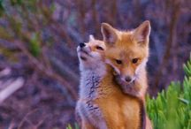 What does the fox say? / by Barbara Jetley