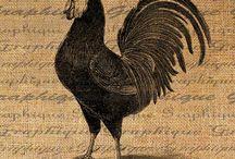 I miss my chickens / by Stitchknit
