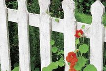fences / by Peg Rewey