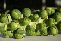 Brussel Sprouts (gardening) / by Karen Rickel