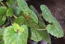 Planten en stekken