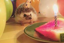 Cute Hedgehogs!