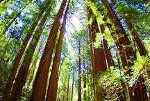 Trees / by Carol Edwards