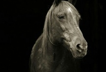 Horses <3 / by Emily Swanner