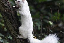 Albino Wildlife / by Deborah Rieger