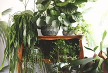 Green / Plants in my house w/Iggy, JUNGLE!