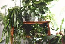 Green / Plants in my house w/Iggy, JUNGLE!