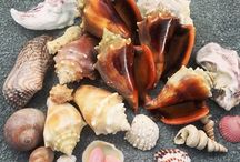insta shells