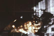 Animals / by Yun Bae