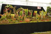 Carnivorous Plants / Carnivorous plants.