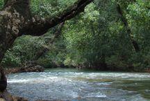 Weekend Getaways Near Goa / Wild woods spa is one of the perfect weekend getaways near Goa.