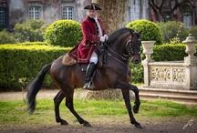 PortugueseSchool of Equestrian Art-Queluzt