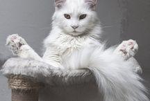 Киски-Маркиски / Здесь кошки и только кошки!!!