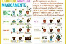 Pollice verde / piante, fiori...vasi, balconi e giardini