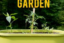 Gardening / Let your green thumb run wild with gardening tips and tricks to keep you inspired year-round!
