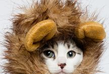 Cat Costumes / Finding some cute, crazy, silly and downright scary costumes for cats. Please note never ever force your cat into a costume if it is not happy