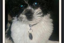 Noodle / Puppy Love