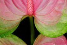 【生物】植物