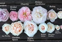 Flower names / Learn about flowers