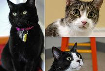 PAWS Cats and Dogs / Adorable adoptables, news, and behind the scenes fun from PAWS Companion Animal Shelter.